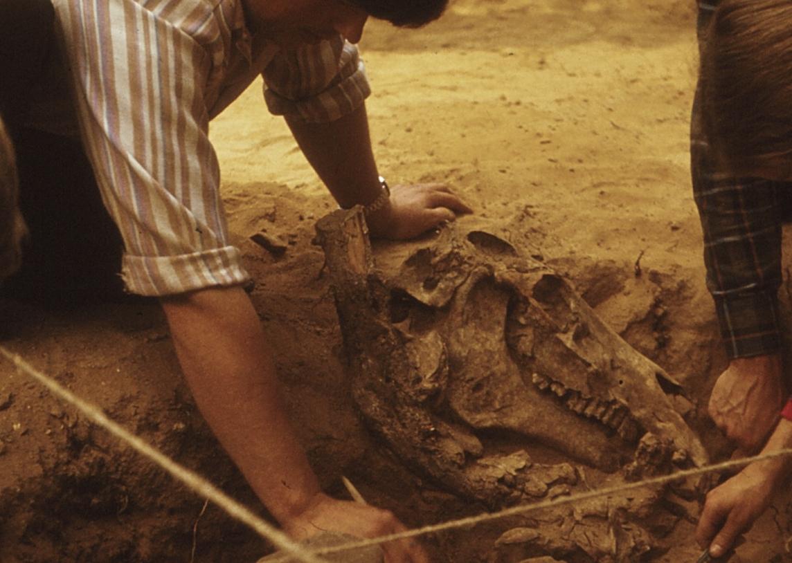 Archeologo paskaitos Kernavės muziejuje. Šešta dalis. Žirgo kapas