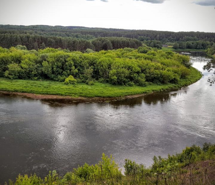 Upės vingis