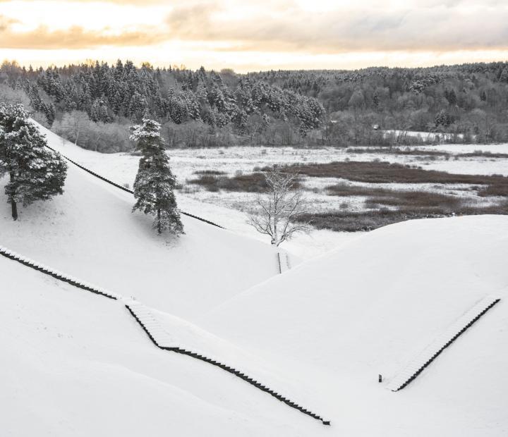 Snieguota gamta